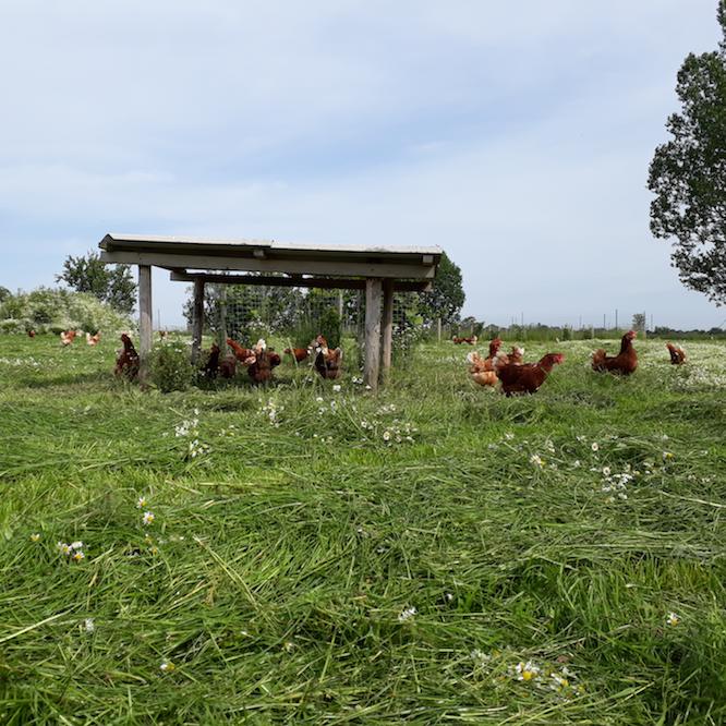 Eier aus Freilandhaltung vom Dingholzer Hofkiosk